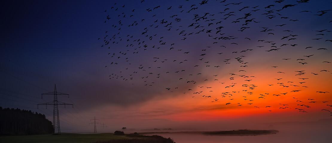 पक्षी के लिए छत पर रखे आनाज और पानी  क्युकी पक्षी लाते हैं सकारात्मक ऊर्जा