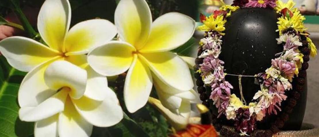 जानिए इस वजह से शिव पूजा में नहीं लेते केतकी के फूल…